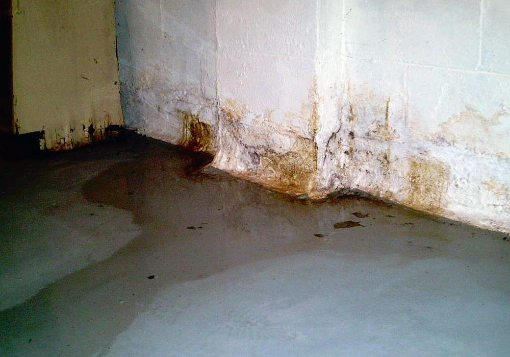 basement leak mi