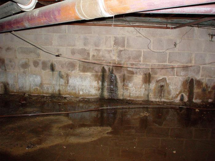 basement leaks michigan